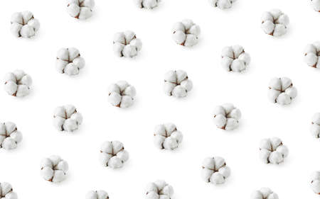 Pattern of cotton flowers isolated on white