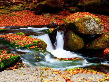de herfst bij de kloof van Kikuchi, Kumamoto, Japan Stockfoto