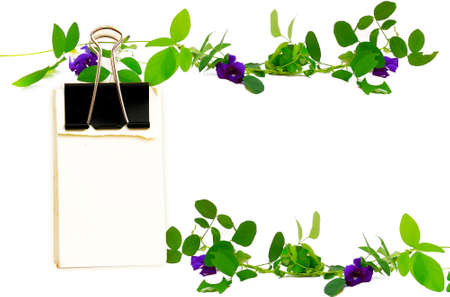 butterfly stationary: Note paper hanging on the vine of Clitoria ternatea