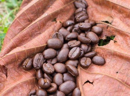 coffee bean on dry leaf, Stock Photo