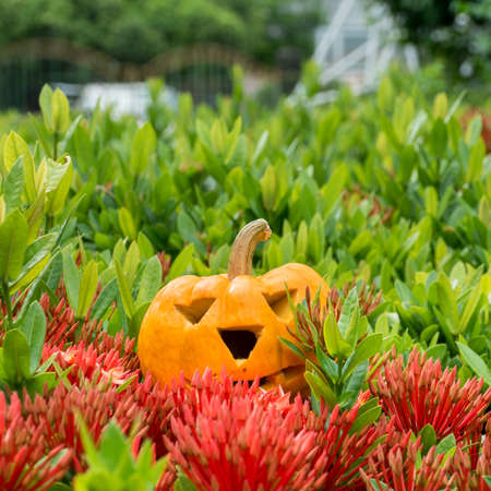 Holiday pumpkins and decorations. Pumpkin on autumn street. yellow pumpkin on tree red flower. Stock Photo