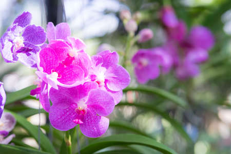 Pink orchid on bokeh background,
