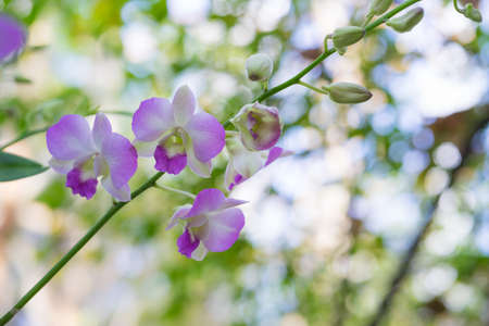 Beautiful Orchid flower on bokeh background,