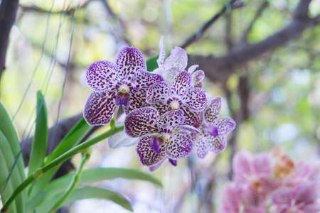 Beautiful Orchid flower on bokeh background, pattern orchid image, Фото со стока