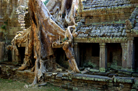 khan: Tree Growing in Preat Khan Temple, Cambodia Stock Photo