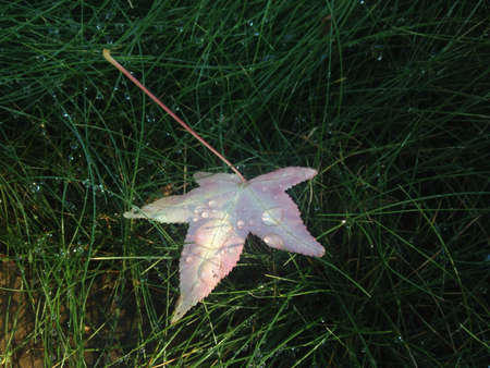 Leaf in grass covered in dew drops.