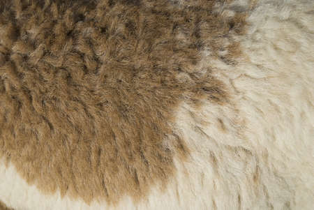 Brown   White Wool photo