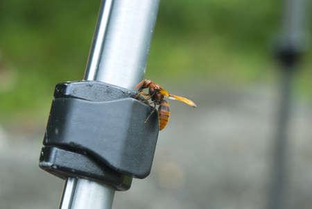 Wasp on Tripod photo