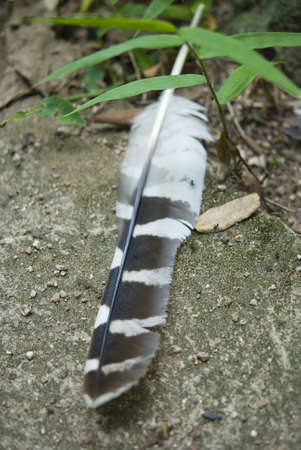 Black   White Feather on floor photo