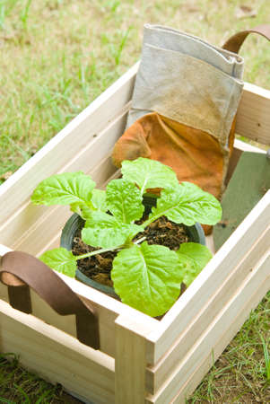Plant and gardening tools inside wooden crate photo