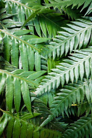 A Closeup of Refreshing Fern Leafs Stock Photo