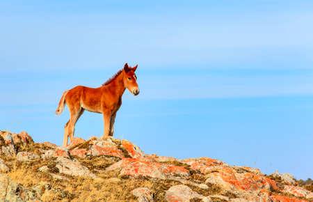 Foal in the sky Stock Photo