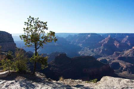 south rim: Beautiful evening in Grand Canyon National Park, South Rim, Arizona