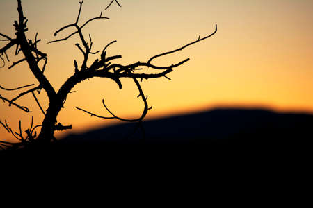 tree branches: Tree Branches Silhouette on Orange-yellow background Stock Photo