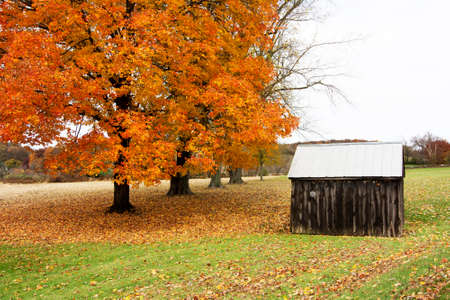 farm building: Farm building with a bright and colorful maple tree background in Autumn last week of October in Pennsylvania United State Stock Photo