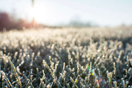 december sunrise: A cold frost on the grass and cover all over the ground with small bokeh and sunrise background in early December morning Stock Photo