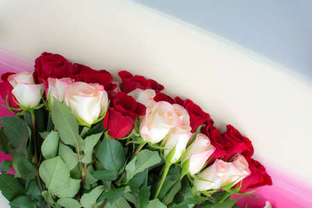 Mixed red and white roses lay flat on colorful stripes painted wood background, Top shot of red and white roses on colorful painted background
