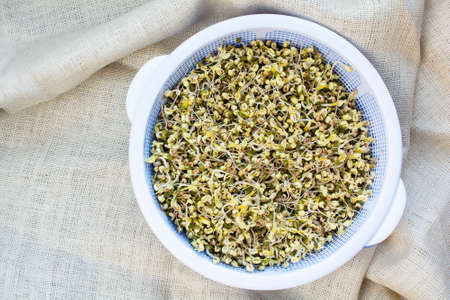 mung bean sprout: Organic homegrown beansprouts in basket on natural burlap background, allnatural growing sprouting beans
