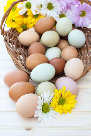 Colorful organic easter chicken eggs overflow out of basket with chrysanthemum flower on wooden background, Colorful chrysanthemum flower on natural chicken eggs, Selected focus organic easter chicken eggs in basket Archivio Fotografico