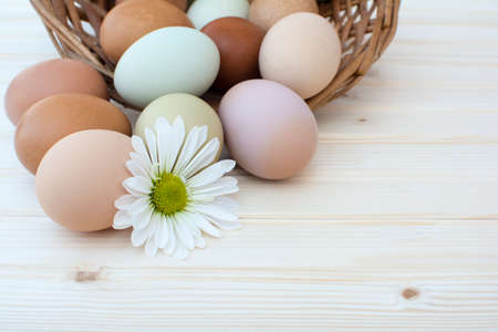 White chrysanthemum flower and colorful fresh organic chicken eggs in basket on wooden background, Colorful natural chicken eggs, Selected focus organic chicken eggs overflow out of the basket, Easter eggs, Archivio Fotografico