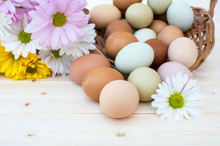 overflow: Chrysanthemum flower and colorful fresh organic chicken eggs in basket on wooden background, Colorful natural chicken eggs, Selected focus organic chicken eggs overflow out of the basket, Easter eggs,