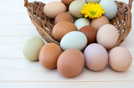Colorful organic easter chicken eggs overflow out of basket with chrysanthemum flower on wooden background, Colorful chrysanthemum flower on natural chicken eggs, Selected focus organic easter chicken eggs in old dusty basket Archivio Fotografico
