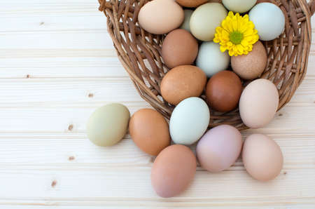 Colorful fresh organic chicken eggs overflow out of old dusty basket with chrysanthemum flower on wooden background, Colorful chrysanthemum flower on natural chicken eggs, Top view of natural chicken eggs overflow out of the basket