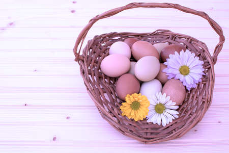 Easter eggs in basket, chrysnthemum flower with fillter in pink