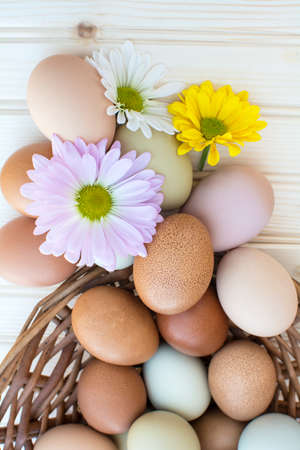 Colorful fresh organic chicken eggs overflow out of basket with chrysanthemum flower on wooden background, Colorful chrysanthemum flower on natural chicken eggs, Selected focus organic chicken eggs overflow out of the basket Archivio Fotografico