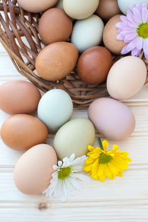 Colorful fresh organic chicken eggs overflow out of old dusty basket with chrysanthemum flower on wooden background, Colorful chrysanthemum flower on natural chicken eggs, Selected focus organic chicken eggs overflow out of the basket