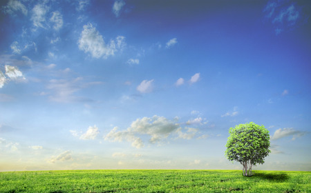 lawn grass: Meadow with green grass and blue sky with clouds and tree Stock Photo
