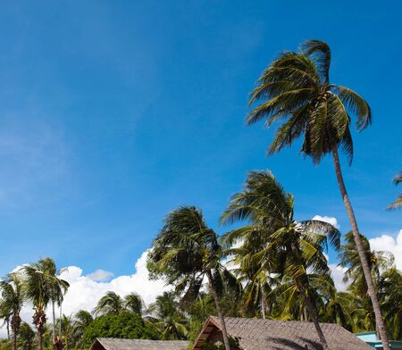 gust: Beautiful view of green palm trees against the blue sky Stock Photo