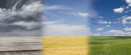 outumn: seasonal field with ripe wheat and blue cloudy sky Stock Photo