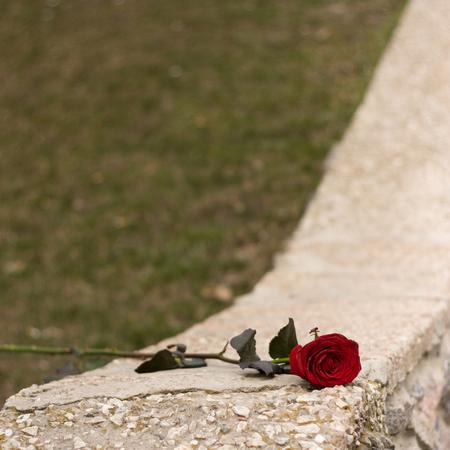 kerb: red rose lying on the grey kerb