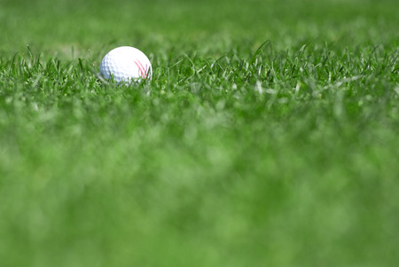 golfball: pictire of green grass with white golfball