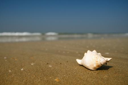 summer beauty: beautiful white seashell lying on the beach Stock Photo
