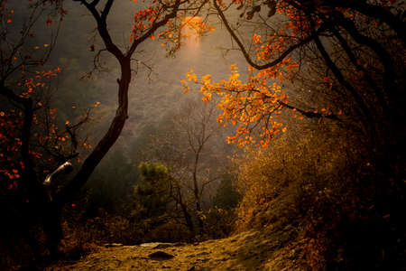 aspen leaf: Autumn foliage on trees in Beijing, China