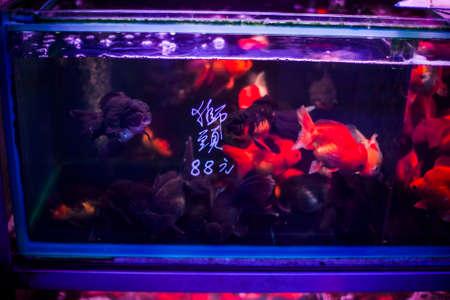 freshwater fish: Exotic large goldfish in a tank in Hong Kong