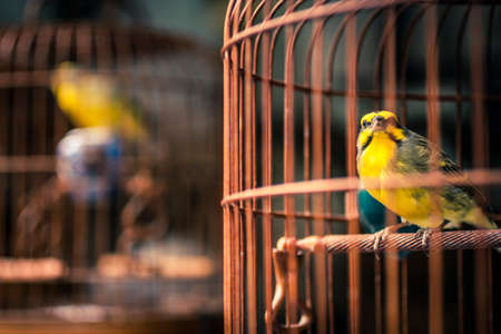 Yellow bird in a cage at a market in Hong Kong Stock Photo