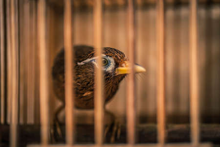 Brown birds in cages at a market in Hong Kong Foto de archivo
