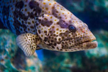 추악한 물고기 스톡 콘텐츠 - 77474487