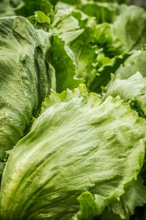 Detail of lettuce 版權商用圖片