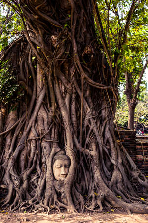 Buddha head in ancient tree roots