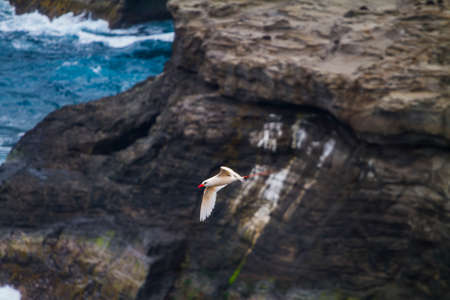 Tropical bird on flying near a cliff