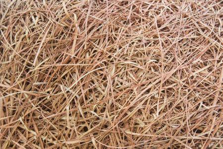 nido de pajaros: paja seca textura de fondo