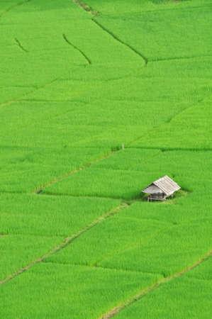 farm ricefields-thailand photo
