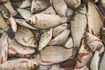Freshwater Rudd Fishes Stock Photo