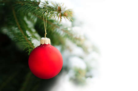 Red Bauble Hanging on a Christmas Tree