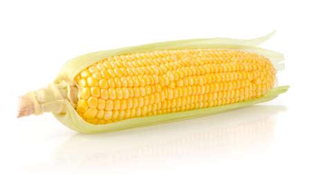 Corn Isolated on White Background Stock Photo