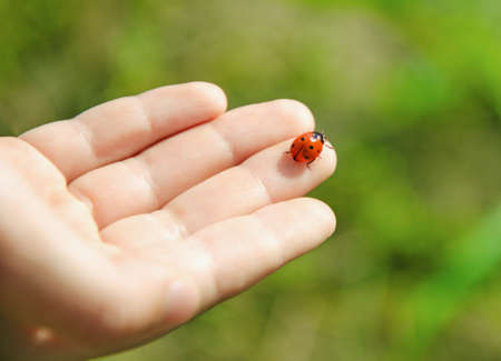 Ladybug en la palma de la mano